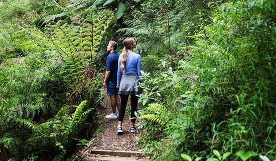 Кейп-Отуэй, Австралия: Walking in Great Otway National Park