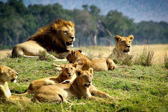Chyulu Hills National Park, Kenya: Chyulu National Park.