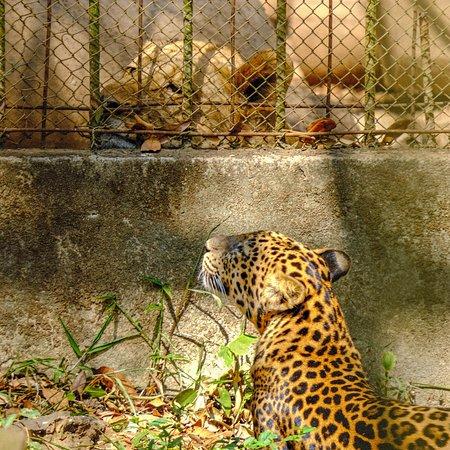 Zoo https://khudulichdraysap.com/gioi-thieu/