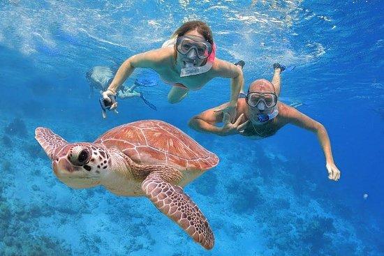 Vissen en snorkelen De hele dag ...