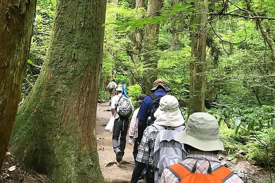 Private Tour - A Hiking Tour of Mt.Takao and its Exciting Sights