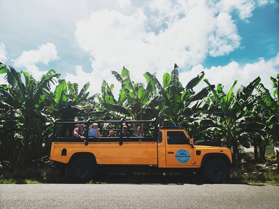 Svatá Lucie: Come visit one of our largest banana plantations.