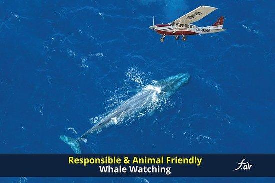 Verantwortungsvolle und...
