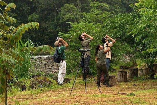 Costa Rica Bird Paradise