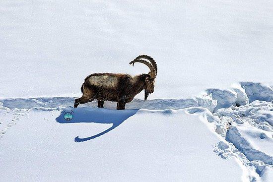 Expédition de léopard des neiges Vallée de Spiti