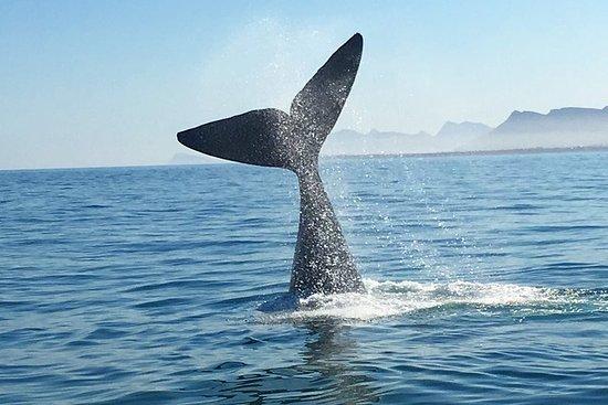 Visite d'observation des baleines...