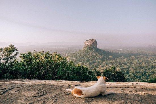Dagstur til Pidurangala fra Negombo.