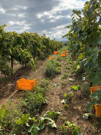 Cellere, Italien: Azienda Agricola Bio Lotti