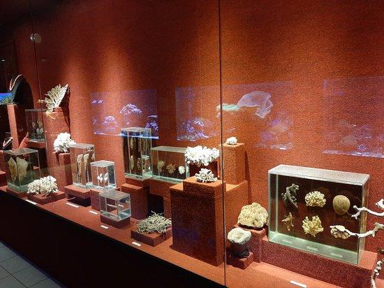 תמונה מOfficial Ticket: Oceanographic Museum Univali - Piçarras - SC