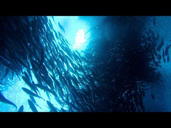 Ecuador: Scuba diving can be really fun with us.