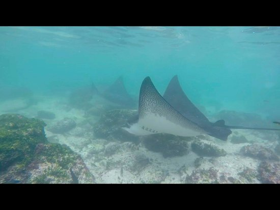 Ecuador: Be part of our snorkeling adventures