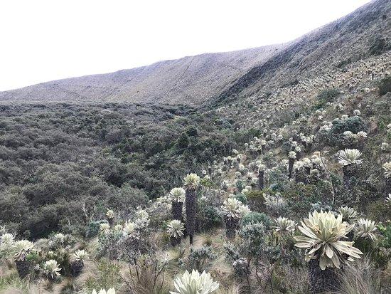 El Angel, Эквадор: valle