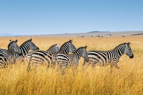 Safari ya Africa Adventures