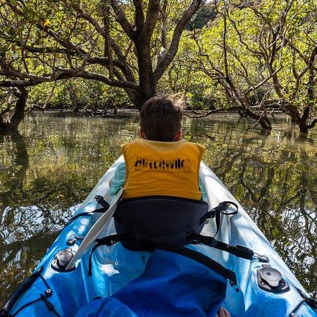 Mangrove trees at high tide !!