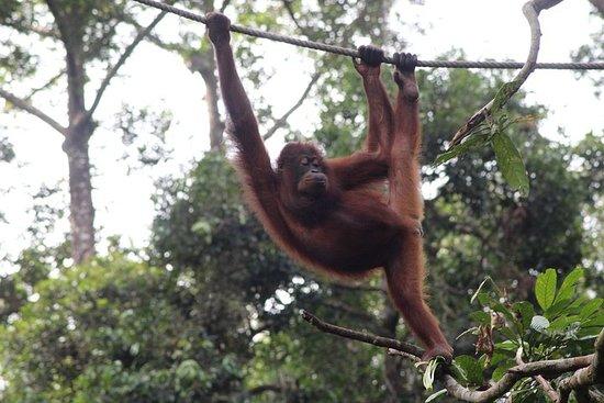 Excursion d'une journée à la faune de Sandakan à Bornéo