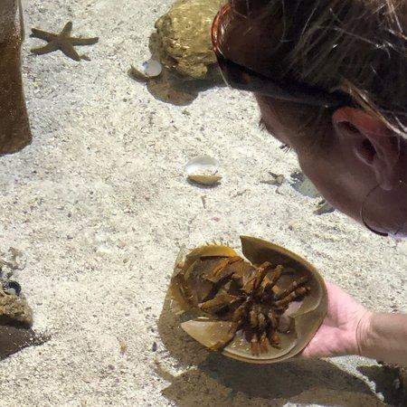 Marine Aquarium Key West