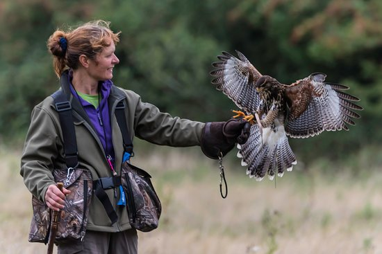Hampshire Hawk Walks