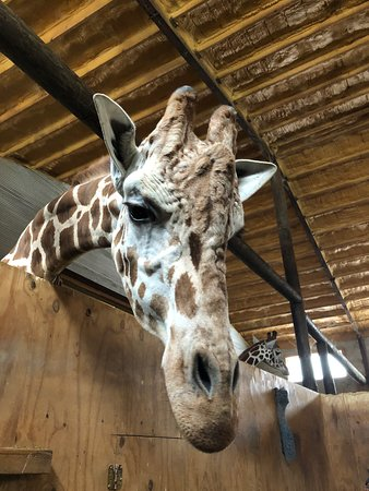 Indian Creek Zoo (Lambertville) - 2020 All You Need to Know BEFORE You Go (with Photos) - Tripadvisor