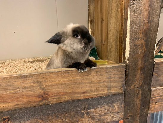 Zoo'Opolis Exotic Petting World