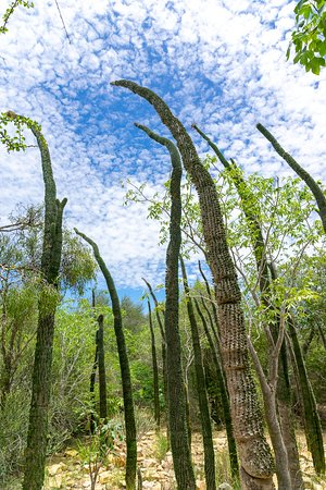 Arboretum d'Antsokay (Toliara) : 2020 Ce qu'il faut savoir pour ...