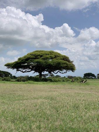 Amboseli National Park, Kenya: Natur, soweit das Auge reicht