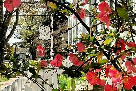 Victorian Bloom and Garden Carriage Tour