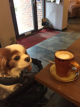 Travels with Charlie -- Enjoying a Latte with my dog in this dog friendly cafe.