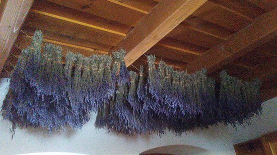 Gyomaendrod, Hungría: Beautiful and useful lavender in St.Anthony's house in Gyomaendrőd (Hungary)