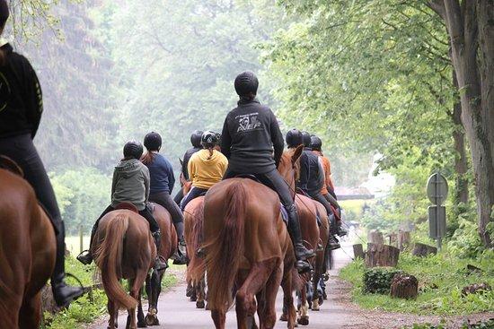 Centre Equestre le Comte