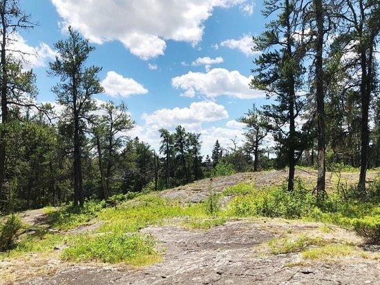 Falcon Creek Self-Guiding Trail