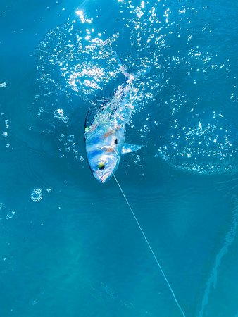 Roosterfish action in Puerto vallarta fishing