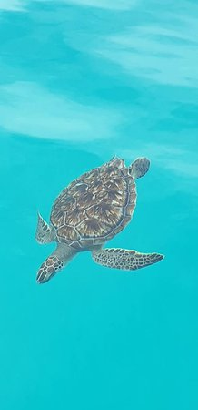Turtle from trip