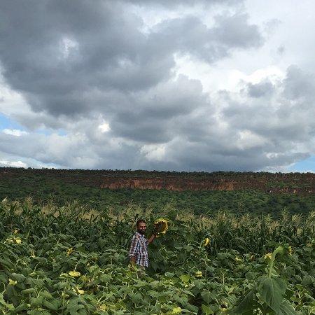 Kajiado, Кения: Sunflower