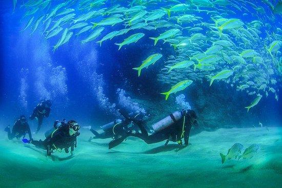 Фотография Cabo San Lucas Beginner Scuba Diving Experience