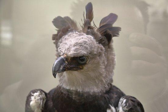 Экспонат Зоологического музея МГУ