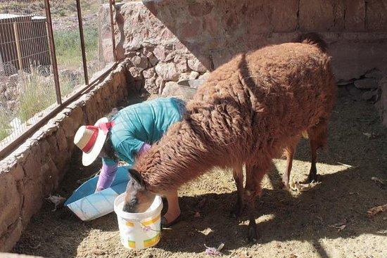 Festival de Atacama e Virgen de Ayquina (setembro de 2020)