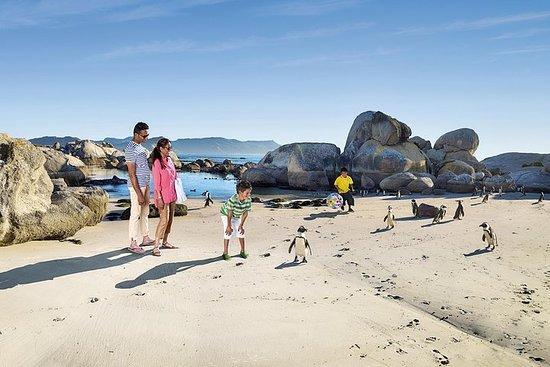 在巨石海灘和非洲企鵝一起游泳-開普敦私人之旅