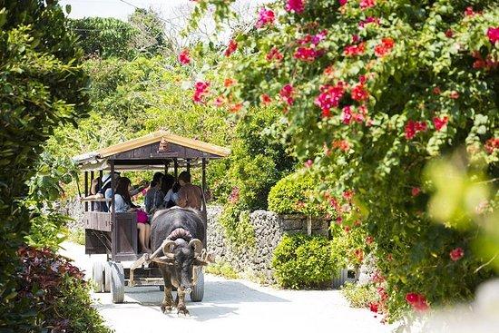 [Okinawa Ishigaki] Plongée en apnée sur l'île Fantom + visite de...