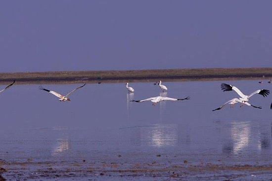 南昌婺城鄱陽湖自然保護區觀鳥之旅