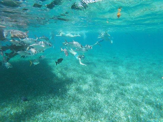 San Pedro, Belize: snorkeling