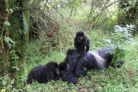 Wild Expeditions Uganda