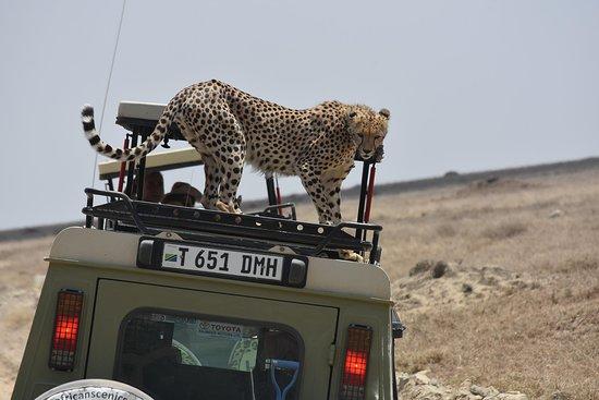 Burigi Tours and Safaris Ltd