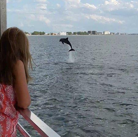 Onlooker watching dolphin jumping