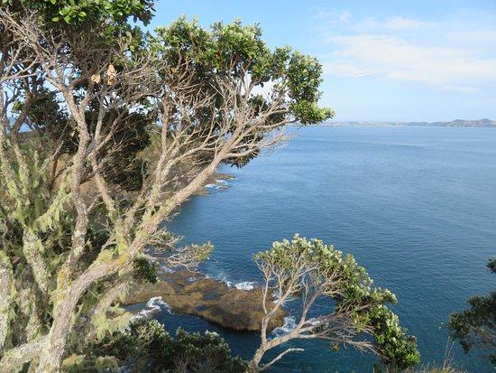 Motuarohia (Roberton) Island Track