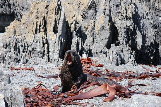 Seal Coast Safari Tour by 4WD: Do you like my teeth