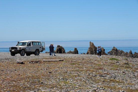 Seal Coast Safari Tour by 4WD: Morning tea time