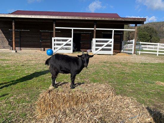 Farm Sanctuary & Vegan Wine Tour: At Charlie's Acres