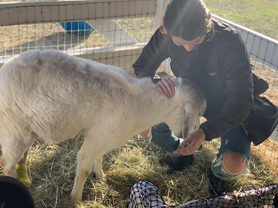 Farm Sanctuary & Vegan Wine Tour: All the animals are so sweet