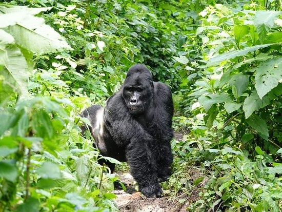 Grassrootz Adventures Uganda
