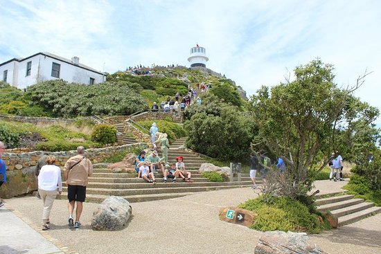 Cape Of Good Hope, Penguins Private Tour from Cape Town journée...